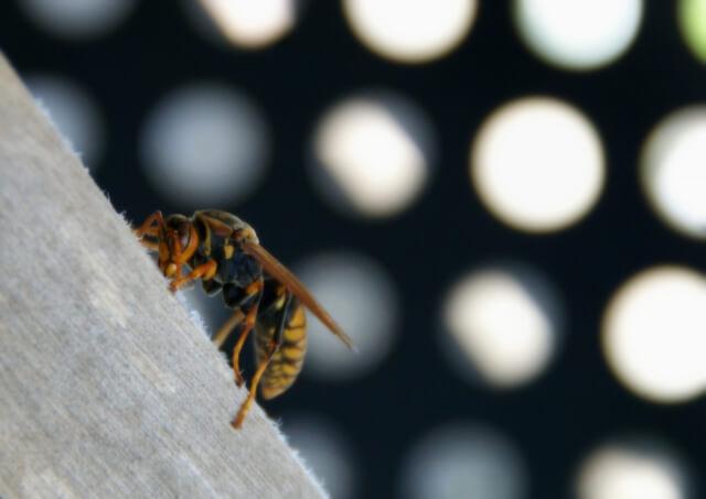 蜂、マンションベランダにくる、対策、木酢液