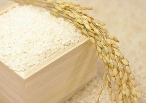 稲,穂,米粒何粒,おちゃわん
