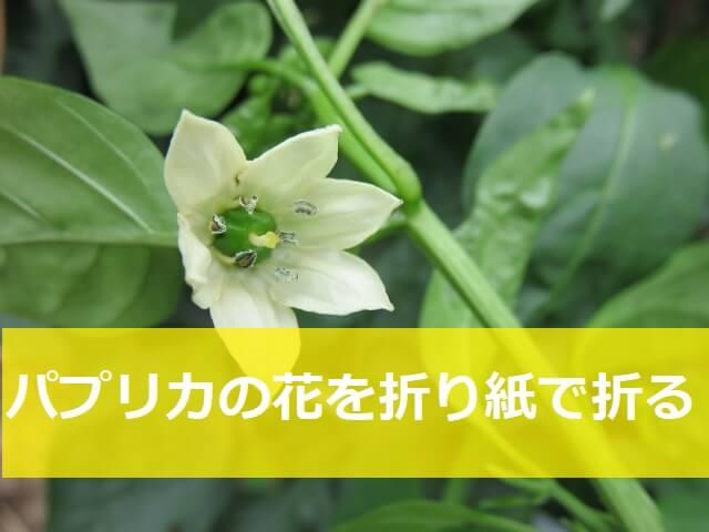 パプリカの花の折り紙