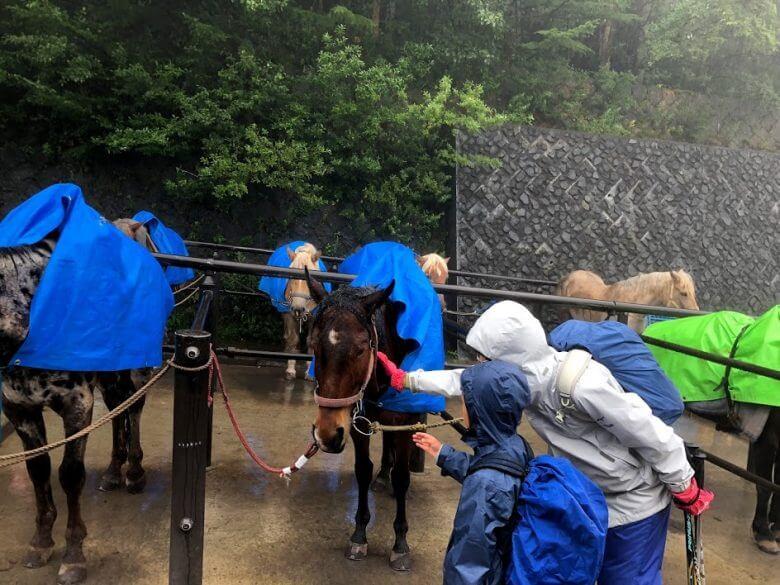 富士山5合目 馬
