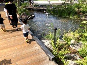 池の橋を渡る子供
